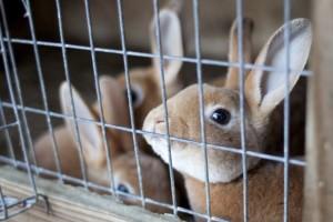 crisis del conejo