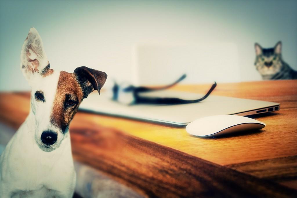 seguro del hogar mascotas