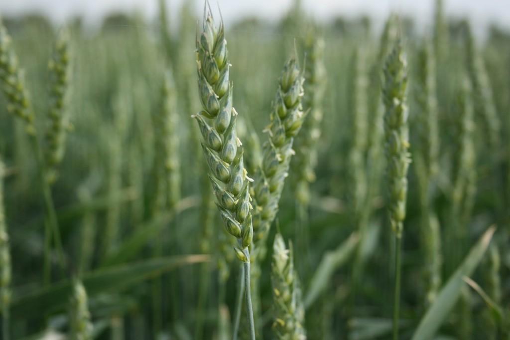 cultivos herbaceos plan de seguros agrarios