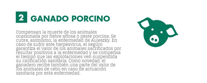 seguros pecuarios para ganado porcino