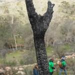 Seguros RGA - Reforestación del Monte Santa Catalina