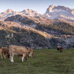 lagos-covadonga-wikimedia