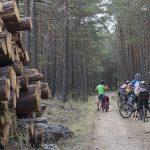 Ruta entre pinares Serranía Cuenca