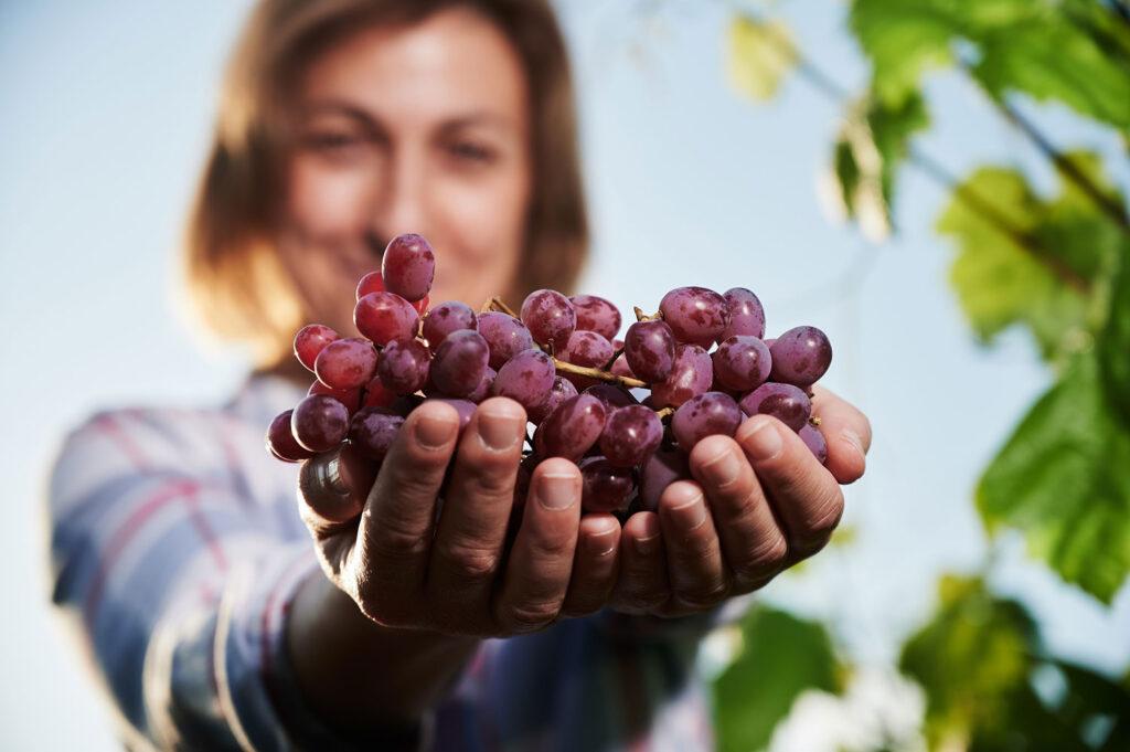 viñedos rioja y murcia