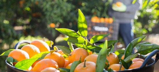 indemnizaciones seguro agricultura RGA